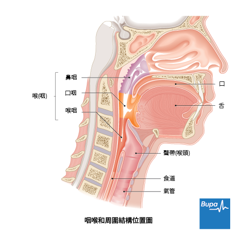 咽頭 炎 原因
